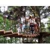 树上丛林探险